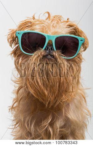 Funny Dog In Glasses