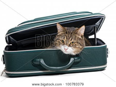 Grey Cat Sitting In A Green Suitcase