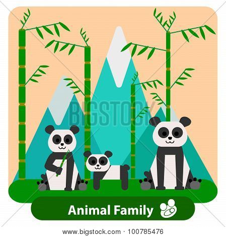 Family panda on the background of bamboo and mountains.