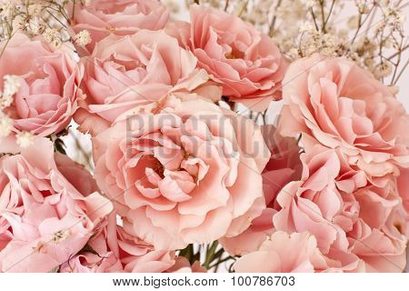 Tender pink tea roses background