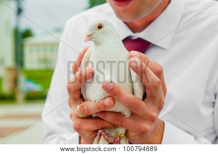 Pigeon In Hands