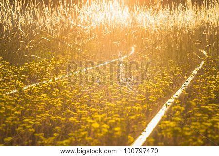 Blossoming Railways