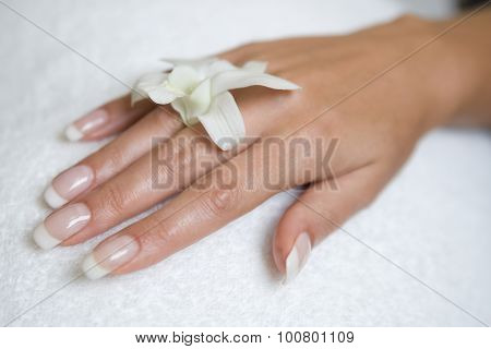 womans hand and orchid
