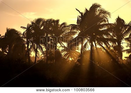 Sunset through the palm trees