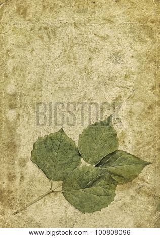 Leaves on old paper background