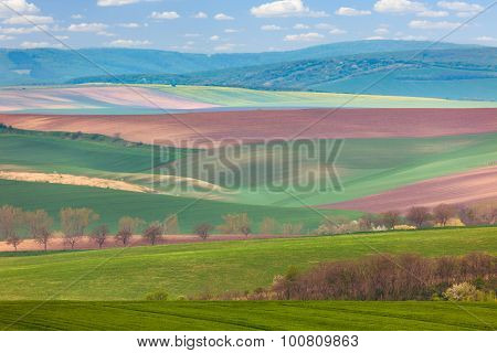 Spring Landscape of fields in countryside - different colors of hills