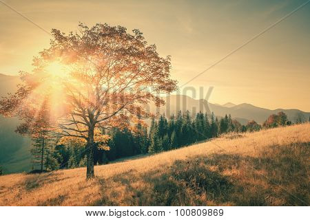 Autumn tree and sunbeam warm day landscape toned in vintage color