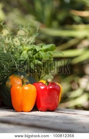 Peppers, radishes, squash and herbs
