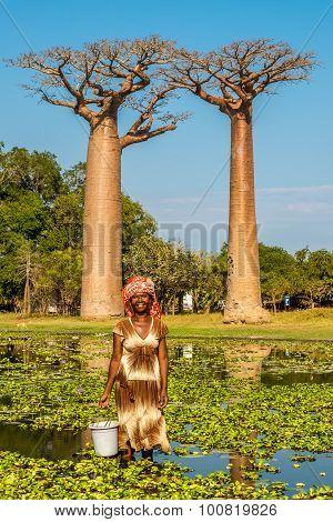 Woman From Village Near Baobabs Avenue