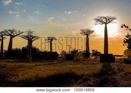 Evening In The Village Near Baobab Avenue