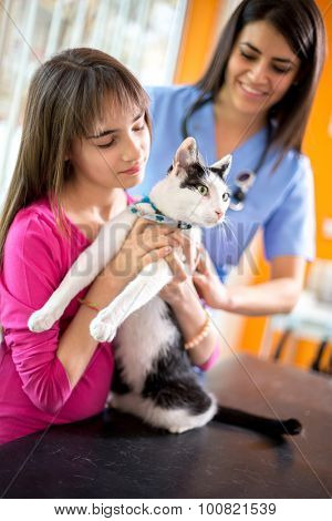 Curious cat watching vet ambulant while girl is holding her