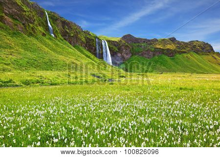 Iceland in July. Warm summer day. Seljalandsfoss waterfall and picturesque flowering fields