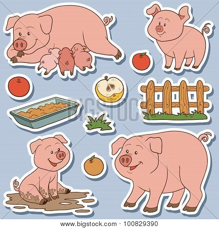 Color Set Of Cute Domestic Animals And Objects, Vector Family Pigs And Objects