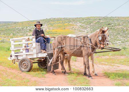 Horse Drawn Cart At Boemansuitkyk