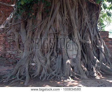 Sacred tree.