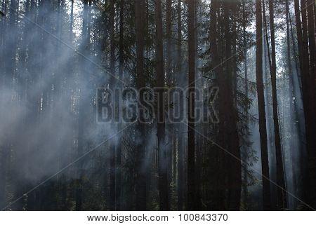 Karelia. Fog In A Wood