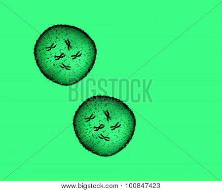Two Microbe Green Seen In A Microscope In A Medical Office