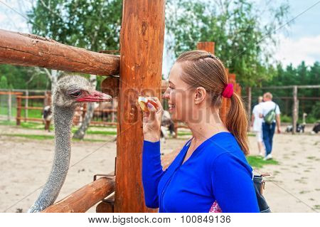 Young attractive woman feeding ostrich