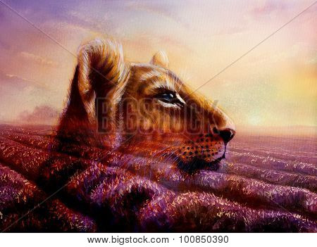 Little lion cub head on purple lavender fields. animal painting and violet flowers on sunset.