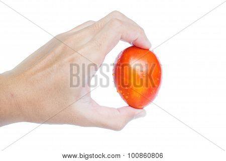 Hand holding fresh mini plum tomato, isolated on white background