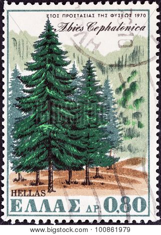 GREECE - CIRCA 1970: A stamp printed in Greece shows Greek Fir (Abies cephalonica)