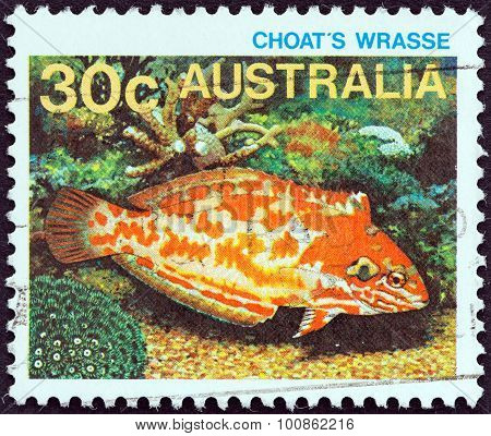 USTRALIA - CIRCA 1984: A stamp printed in Australia shows Choat's wrasse
