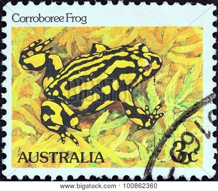 AUSTRALIA - CIRCA 1981: A stamp printed in Australia shows Corroboree frog