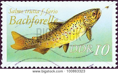 GERMAN DEMOCRATIC REPUBLIC - CIRCA 1987: A stamp printed in Germany shows Brown trout (Salmo trutta)