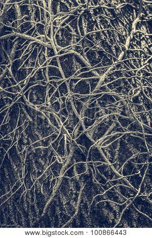 Twisted Leafless Vines Creeper