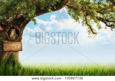 Background With A Tree And An Owl