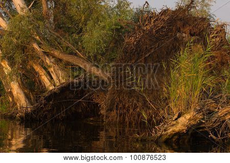 Trees Uprooted