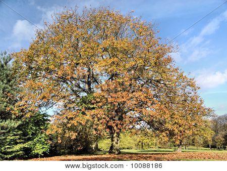 Autumn's Tree