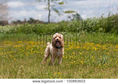 Cute Puppy in Meadow under Blue Sky