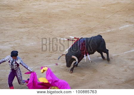 Retreating Bullfighter At The Arena Of The Plaza Monumental De Barcelona