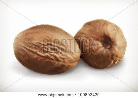 Nutmeg, vector icon
