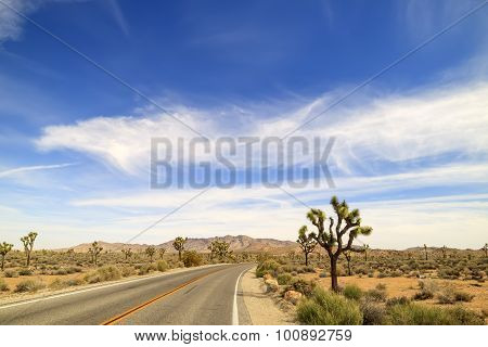 Landscape In Joshua Tree National Park