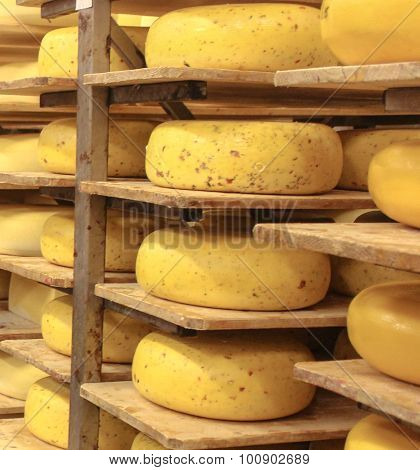 Aging Gouda Cheese