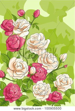 white and red roses with leaves on background