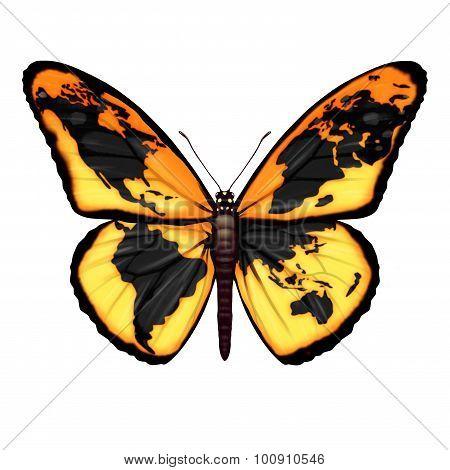 Global Butterfly