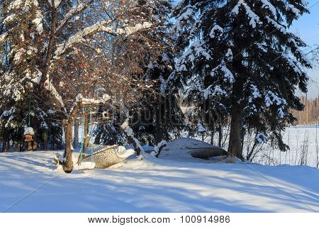 Cradle, Backlight, Sun, Snow And Trees