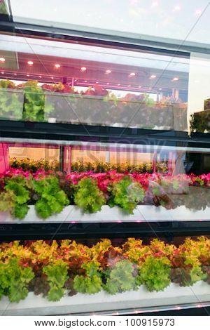 Hydroponics method of growing plant
