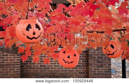 three jack-o-lantern baskets in autumn tree with orange foliage