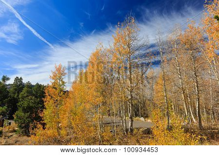 Aspen Near Fallen Leaf Lake