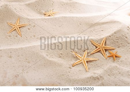 starfishes on sea sand background