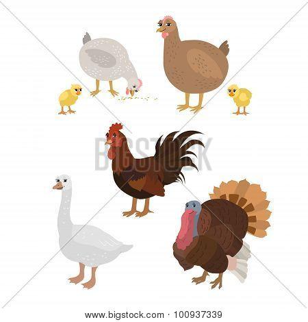 Cartoon set: chicken cock chickens goose turkey.