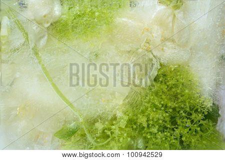 Frozen   Flower Of         Jessamine And Hydrangea
