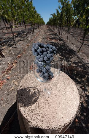 Wine Glass With A Bunch Of Grapes On Table In Vineyard