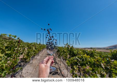 Grapes Fly Out Of Wine Glass Held In A Hand