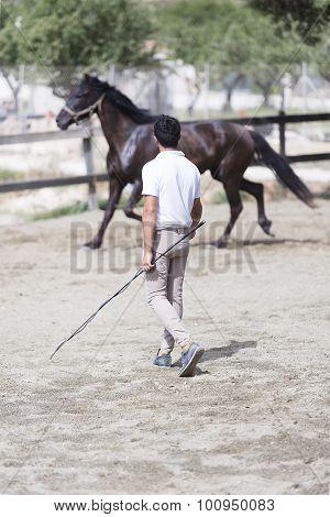 boy training horse