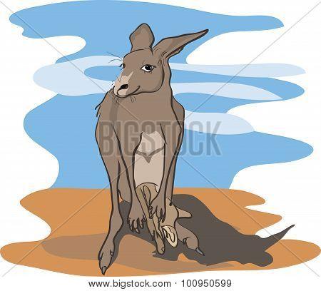 kangaroo with baby kangaroo